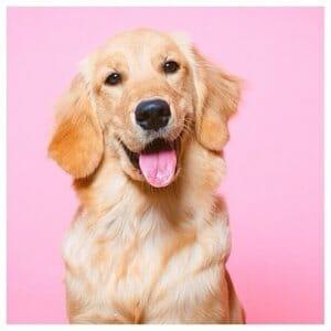 Pawstruck Pets Shoutout