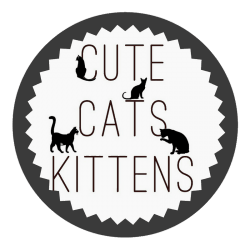 CuteCatsKittens-250x250 Buy Instagram Shoutouts %shoutout
