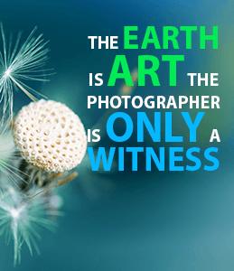 Earth is art photographer is witness