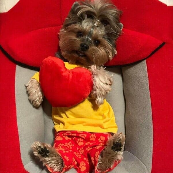 Yorkshire Terriers and other mini dogs, good for dogs clothes, accessories and food or just to promote your own pet) *Note that we usually leave posts online longer than agreed upon, if they're a good match for the account.